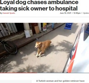 【海外発!Breaking News】飼い主が乗る救急車を病院まで全速力で追いかけた犬(トルコ)<動画あり>