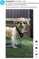 3キロの毛の塊で異臭、歩くことも困難だった犬が保護 「最悪のケース」も第2の人生へ(米)<動画あり>