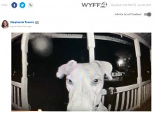【海外発!Breaking News】深夜3時に玄関ベルを鳴らして帰宅した犬 「朝帰りする若者と同じ」と笑いの声(米)<動画あり>