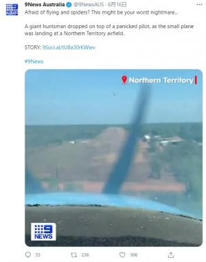 【海外発!Breaking News】着陸直前に巨大クモが出現 操縦者はパニックも同乗者は爆笑で機内は大混乱(豪)<動画あり>