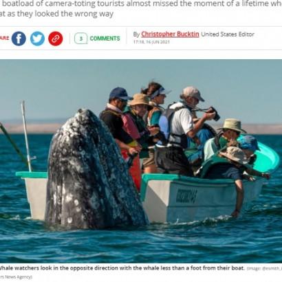 【海外発!Breaking News】ホエールウォッチングボートの真後ろで巨大クジラが静かに「スパイホップ」(メキシコ)