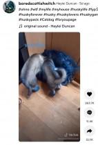 たった20分の留守中に家中が真っ青、ペンキまみれで遊ぶ子犬に飼い主も青ざめる(スコットランド)<動画あり>