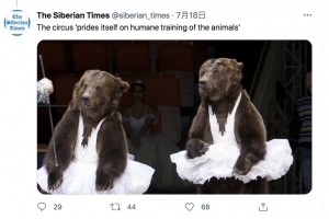ショーに登場していたクマたち(画像は『The Siberian Times 2021年7月18日付Twitter「The circus 'prides itself on humane training of the animals'」』のスクリーンショット)