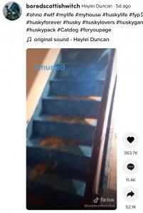 階段も全て青く(画像は『Haylei Duncan 2021年7月15日付TikTok「#ohno #wtf #mylife #myhouse #huskylife」』のスクリーンショット)