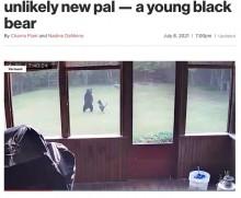 """【海外発!Breaking News】裏庭で犬が一緒に遊んでいたのは野生のクマ """"友情""""に驚く飼い主(米)<動画あり>"""