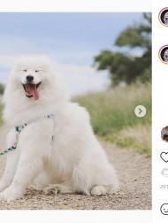 【海外発!Breaking News】最高にハッピーな犬と不機嫌すぎる猫 真逆の表情も最高のコンビ(ニュージーランド)<動画あり>