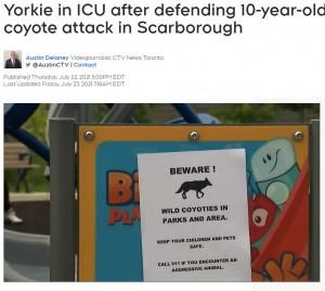 街中に掲示されていたコヨーテ出没を注意するポスター(画像は『CTV News 2021年7月23日付「Yorkie in ICU after defending 10-year-old owner from coyote attack in Scarborough」』のスクリーンショット)