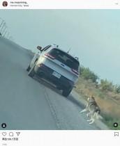 置き去りにした飼い主の車を必死に追う犬、新しい家族のもとで幸せに(米)<動画あり>