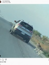 【海外発!Breaking News】置き去りにした飼い主の車を必死に追う犬、新しい家族のもとで幸せに(米)<動画あり>