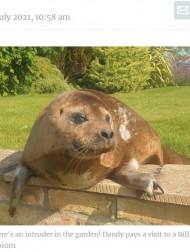【海外発!Breaking News】「うちの庭にアザラシがいるんですけど…」 海から30キロ離れた民家でくつろぐ姿に仰天(英)