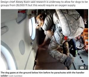 機内で外の様子を窓から見ている犬(画像は『The Sun 2021年7月6日付「PARA-POOCH JUMP Crazy video shows Vladimir Putin's war dogs parachute into battle from 13,000ft strapped to Russian soldiers」(Credit: East2West)』のスクリーンショット)