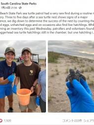 【海外発!Breaking News】双頭の赤ちゃんウミガメを発見 1つの甲羅をシェアして海へ(米)