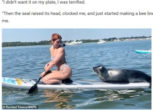 休憩する場所が欲しかった?(画像は『WhatsNew2Day 2021年7月28日付「Seal Stuns Paddleboarder As He Hops On Her Board As She Cruises Through Dorset Harbour」(Rachael Towers/BNPS)』のスクリーンショット)