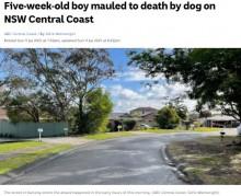 【海外発!Breaking News】生後5週間の男児、飼い犬に襲われ死亡 数週間前には隣家の犬も襲われる(豪)