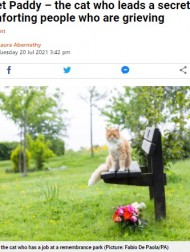 【海外発!Breaking News】葬儀場で悲しむ人を癒し続ける猫、飼い主も数年は気付かず(英)