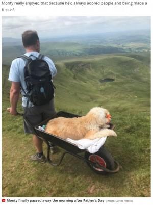 【海外発!Breaking News】白血病の愛犬を手押し車に乗せて最後の山登り 多くの人の手を借りて頂上へ(英)<動画あり>