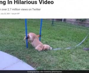 【海外発!Breaking News】運動が苦手でやる気がない犬、障害物コースに挑戦する姿に大爆笑(米)<動画あり>