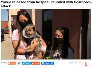 コヨーテから10歳少女を守ったヨークシャーテリア 小さな体で果敢に立ち向かう(カナダ)<動画あり>