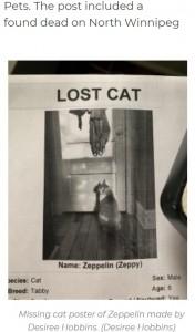 ツェッピーを探すために作成したポスター(画像は『980 CJME 2021年7月20日付「Back from the dead: Cat comes back 9 months after woman cremates it」(Desiree Hobbins)』のスクリーンショット)