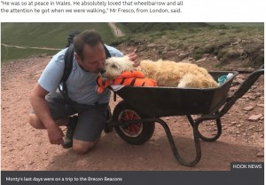 手押し車の乗り心地を気に入った様子のモンティ(画像は『BBC 2021年7月8日付「Brecon Beacons: Sick dog takes final walk in wheelbarrow」(HOOK NEWS)』のスクリーンショット)