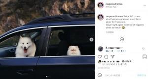 正反対の表情を見せるキャスパーとロメオ(画像は『Casper and Romeo 2019年10月14日付Instagram「Swipe left to see what happens when we leave them alone for 5 seconds.」』のスクリーンショット)