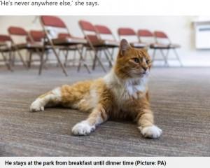 葬儀場に毎日通うオス猫パディ(画像は『Metro 2021年7月20日付「Meet Paddy - the cat who leads a secret life comforting people who are grieving」(Picture: PA)』のスクリーンショット)