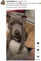 【海外発!Breaking News】「ビューティフル」の言葉に反応する犬 「心がとろけそう」と動画再生回数4200万回超(豪)<動画あり>