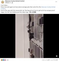 """【海外発!Breaking News】""""イーにゃん・ハント""""出現 「脱走の達人」黒猫の凄技がほぼ『ミッション:インポッシブル』(米)<動画あり>"""
