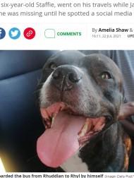 【海外発!Breaking News】夏のビーチに呼ばれて? バスに乗って出かけた笑顔の愛犬をSNSで発見、飼い主は唖然(英)
