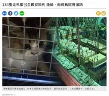 【海外発!Breaking News】アメリカンショートヘアなど密輸された猫154匹を殺処分(台湾)