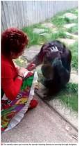 【海外発!Breaking News】チンパンジーに毎週会いに来ていた女性、動物園が入園禁止に「仲間から孤立する」(ベルギー)<動画あり>