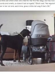 【海外発!Breaking News】泣いている赤ちゃんを大好きなおもちゃで慰める犬<動画あり>