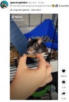 【海外発!Breaking News】世界最小のハーモニカを吹くペットのネズミに「ベストソングでしょ!」の声(オランダ)<動画あり>