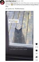 近所の犬が大好きな猫「私と遊んで~」とドアをノック 「もう離れられない」2匹の友情(英)<動画あり>
