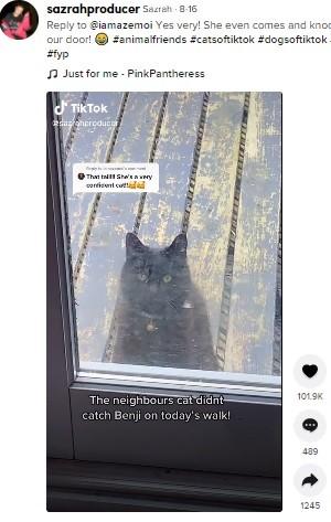 【海外発!Breaking News】近所の犬が大好きな猫「私と遊んで~」とドアをノック 「もう離れられない」2匹の友情(英)<動画あり>