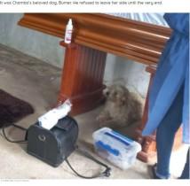 【海外発!Breaking News】95歳で亡くなった飼い主の棺のそばを離れない犬(エクアドル)<動画あり>