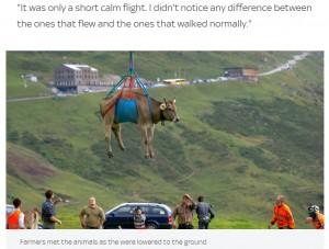 【海外発!Breaking News】下山のため牛がヘリコプターで宙ぶらりんに 「どんな気持ちで飛んでいるの?」(スイス)<動画あり>