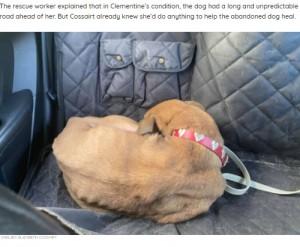 心を閉ざしていたクレメンタイン(画像は『The Dodo 2021年8月17日付「Shelter Dog Who Refused To Look At Anyone Makes The Most Amazing Transformation」(CHELSEA ELIZABETH COSSAIRT)』のスクリーンショット)
