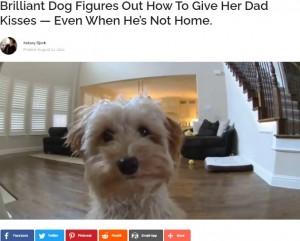 【海外発!Breaking News】屋内防犯カメラにキスする犬が超キュート、留守の飼い主の声に反応<動画あり>