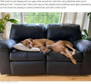 犬には心を開き一緒に過ごしていたクレメンタイン(画像は『The Dodo 2021年8月17日付「Shelter Dog Who Refused To Look At Anyone Makes The Most Amazing Transformation」(CHELSEA ELIZABETH COSSAIRT)』のスクリーンショット)