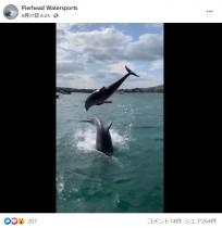 【海外発!Breaking News】野生のイルカが目の前で何度も大ジャンプ 天然の水族館のような光景に歓喜(英)<動画あり>