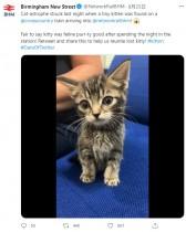 【海外発!Breaking News】電車内で生後5週間の子猫を発見 駅員は「自ら乗るには幼すぎる」(英)<動画あり>