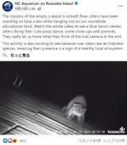 """【海外発!Breaking News】カニ泥棒の正体を暴くためカメラを設置 真夜中に元気に遊ぶ""""犯人""""が明らかに(米)<動画あり>"""