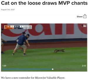 【海外発!Breaking News】ヤンキー・スタジアムを猫が大激走 ファンは「MVPだ!」と試合そっちのけで大盛り上がり(米)<動画あり>
