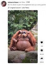 【海外発!Breaking News】檻の中に落ちたサングラスで遊ぶオランウータン 「動物園にいるには賢すぎる」(インドネシア)<動画あり>