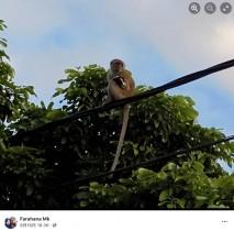 野生の猿が子犬を誘拐 3日後に救助されるも「過去にもペットが連れ去られた」(マレーシア)<動画あり>