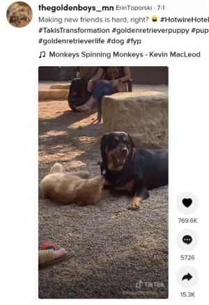 【海外発!Breaking News】公園のボス犬とどうしても仲良くなりたい子犬 必死のアプローチが可愛すぎ(米)<動画あり>