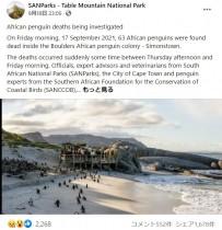 【海外発!Breaking News】蜂による集団攻撃が原因か ペンギン63羽がビーチで死亡(南ア)