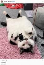 盗み食いする10キロ超の肥満猫、飼い主は冷蔵庫に鍵をつける羽目に(英)<動画あり>