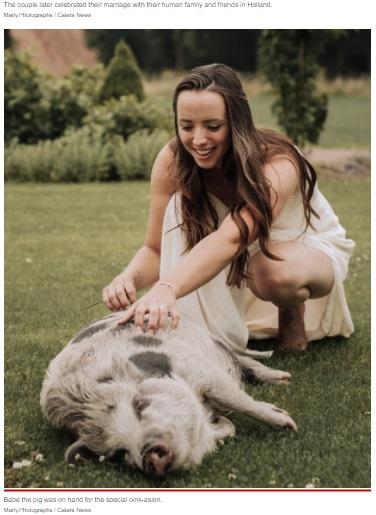 撮影中は終始行儀よく過ごしていたベイブ(画像は『New York Post 2021年8月30日付「Think your bridesmaid was extra? This one was a real pig」(Marly.Photographs / Caters News)』のスクリーンショット)
